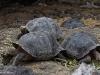 Schildkröten überall
