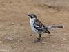 Neugierige Vögel pirschen sich auf wenige Zentimeter an mich heran