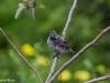 Einer der vielen endemischen Finken