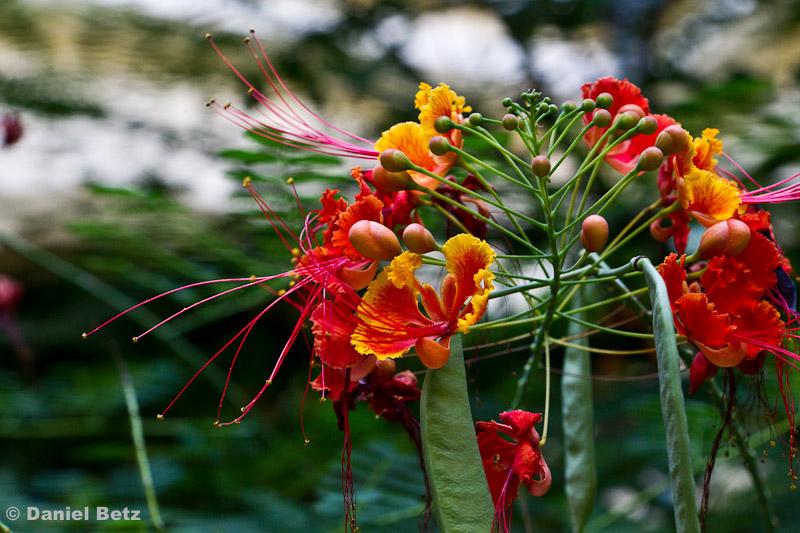Traumhafte Botanik in den Innenhöfen