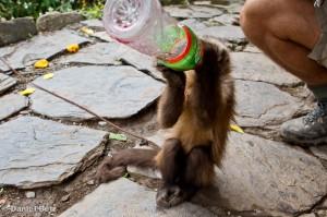 Der Gatorade-Affe