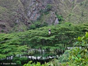 Mit der Zipline über dem Dschungel